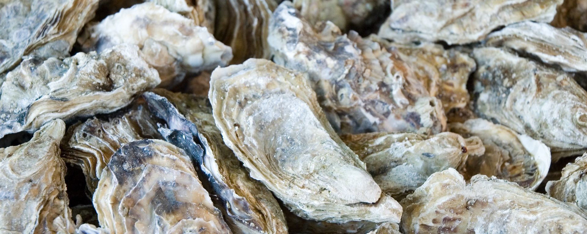 UMBC marine biologist Colleen Burge works to save world's oysters from deadly herpes virus